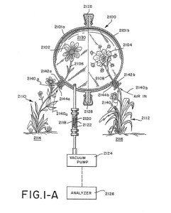 Plant patent drawing